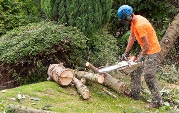 additional services offered by Buckinghamshire tree surgeons