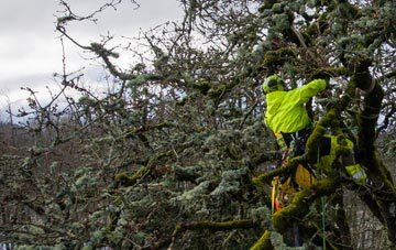 experienced Buckinghamshire arborists are needed