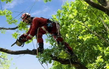 find trusted rated Buckinghamshire tree surgeons