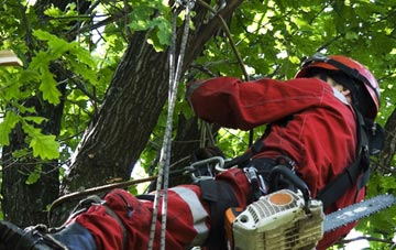 hiring professional Buckinghamshire tree surgeons