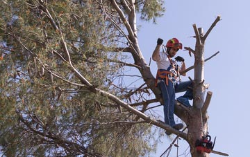 reasons to consider Buckinghamshire tree surgery