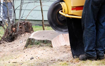 rated Buckinghamshire tree stump removal companies