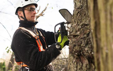 Buckinghamshire tree surgery costs