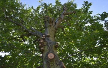 what is Buckinghamshire tree surgery?