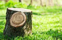 Buckinghamshire tree stump removal services