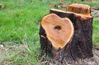 free Buckinghamshire tree stump removal quotes