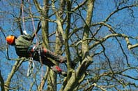 Buckinghamshire tree surgery services