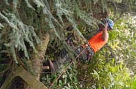 free Buckinghamshire tree surgery quotes